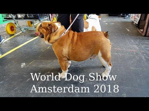 World Dog Show Amsterdam 2018. Short Overview