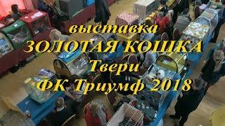 """Выставка """"Золотая кошка Твери"""" ноябрь 2018 (1 день)"""