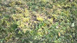 areator-grabie-przyczepka do traktorka ogrodoewgo
