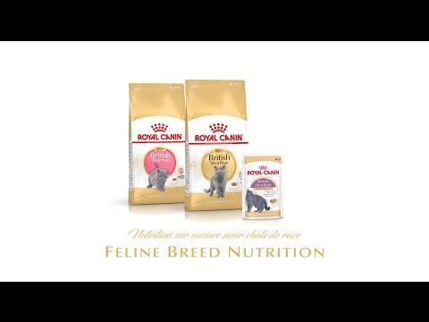 Feline Breed Nutrition British Shorthair Kitten - Adult - Wet ( FR)