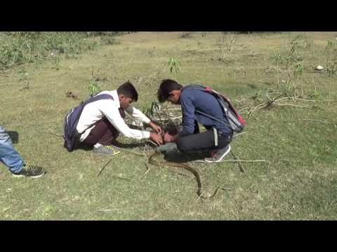 Amravati Resque Team Sarpamitra Try to extrication of Rat Snake from Fishing net