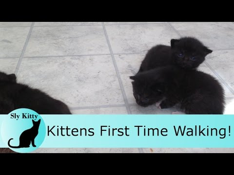 Newborn Kittens Meowing and Walking for the First Time!