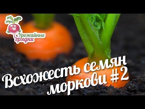 Если хочется морковки чего не хватает