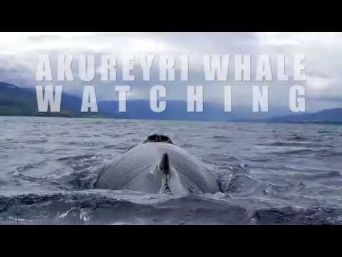 Whale Watching - Things to do in Akureyri