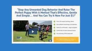 Doggy dan dog training consumer reviewed   advanced dog training reviews