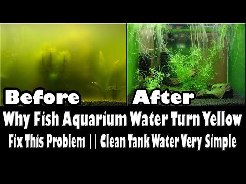 Why Does The Water Turn Yellow In A Fish Aquarium, Fix This Problem Very Simple Urdu And Hindi