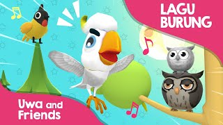 Kumpulan Lagu burung - Burung Kutilang, Burung Kakaktua, Burung Hantu