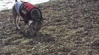 Amos+poodle+beach