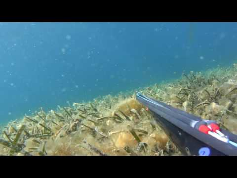 ~ the last shallow journey ~ grey mullet and sea bass hunting in Greece