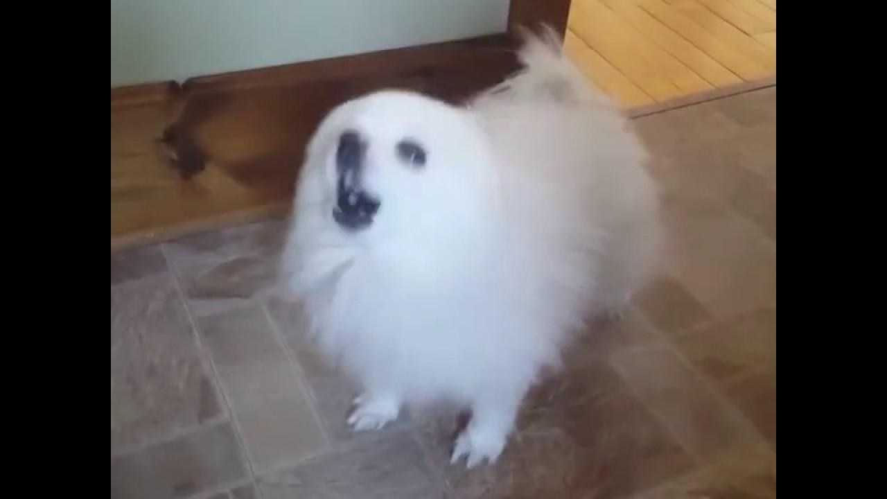 All Original Gabe The Dog Videos