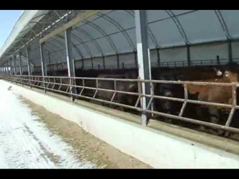 panel cattle post buildings for operation manufactured barns frame by your energy solutions