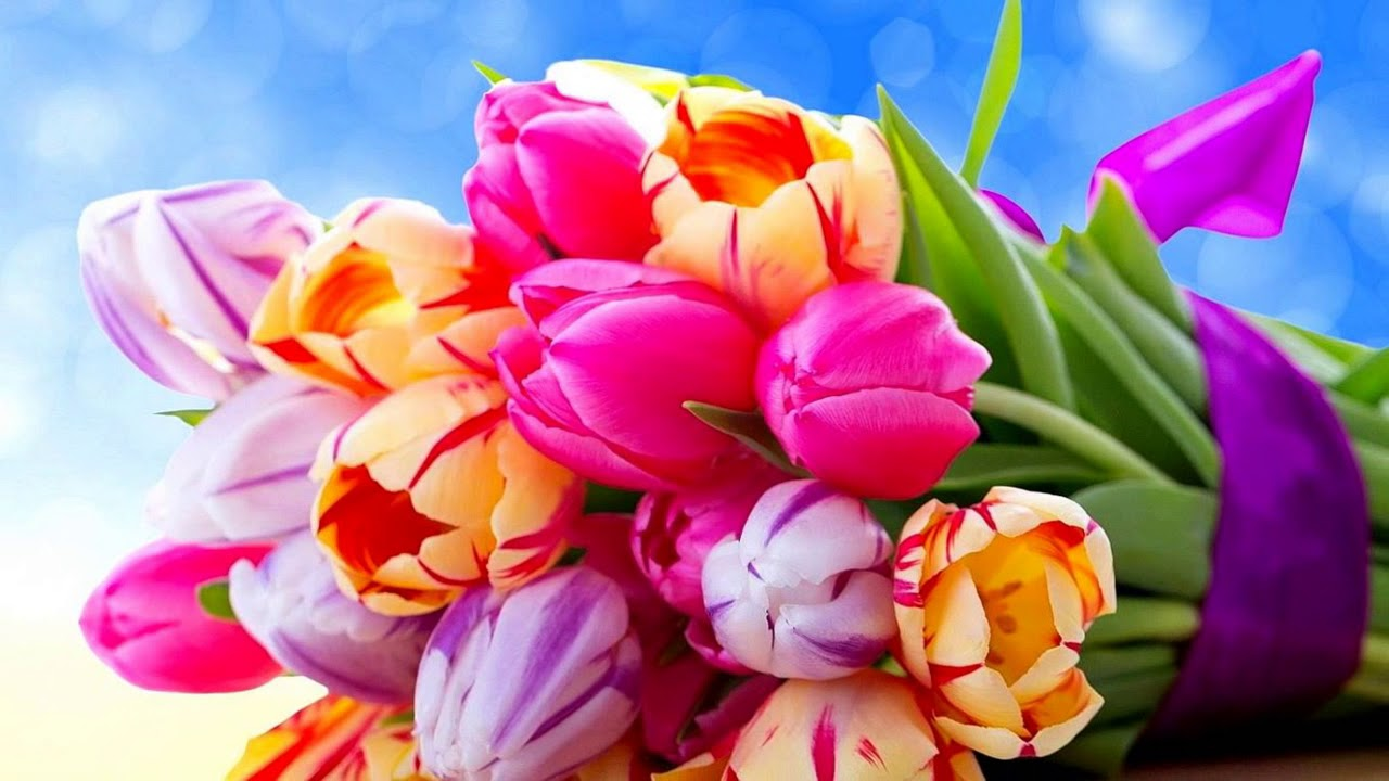 The Most Beautiful Tulips Youtube