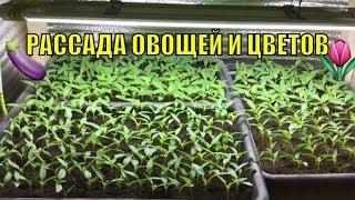 Обзор рассады (овощные и цветочные культуры).