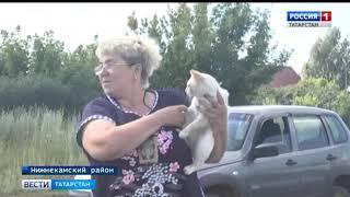 В Татарстане кот спас хозяев от верной смерти при пожаре