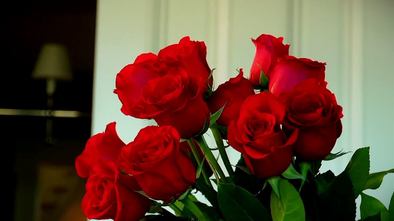 How to make your valentines roses last at home with p allen how to make your valentines roses last at home with p allen smith reviewsmspy