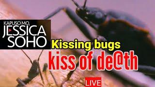 Kapuso Mo Jessica Soho KISSING BUGS SAAN MAAARING HUMANTONG October 24, 2021