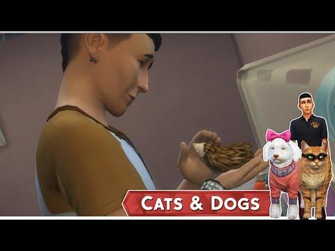 Az Állati Meló 🐕 - Saját SÜNI! 🤩 - 18. rész (Cats and Dogs)