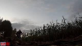 Это моя кукуруза прикол