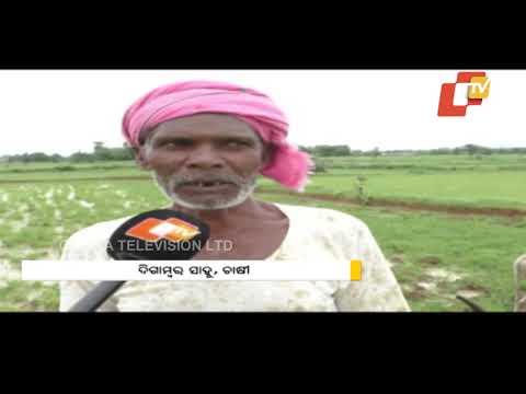 Farmers Of Western Odisha Facing Hardship In Getting Fertilisers