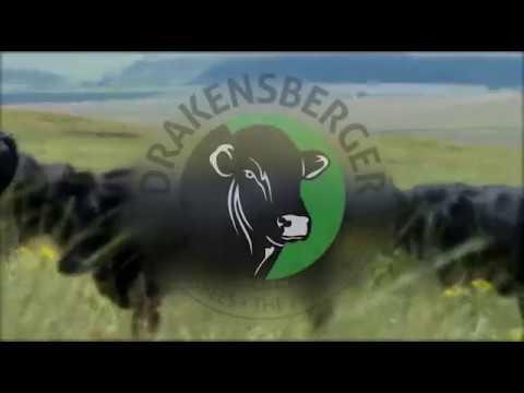 DRAKENSBERGER CATTLE BREEDERS SOCIETY