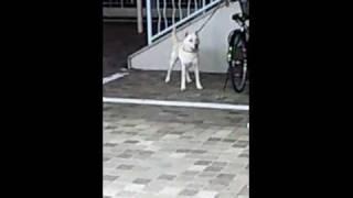 犬が叫んでいるところです。この犬は何を言いたかったのでしょうか・・...