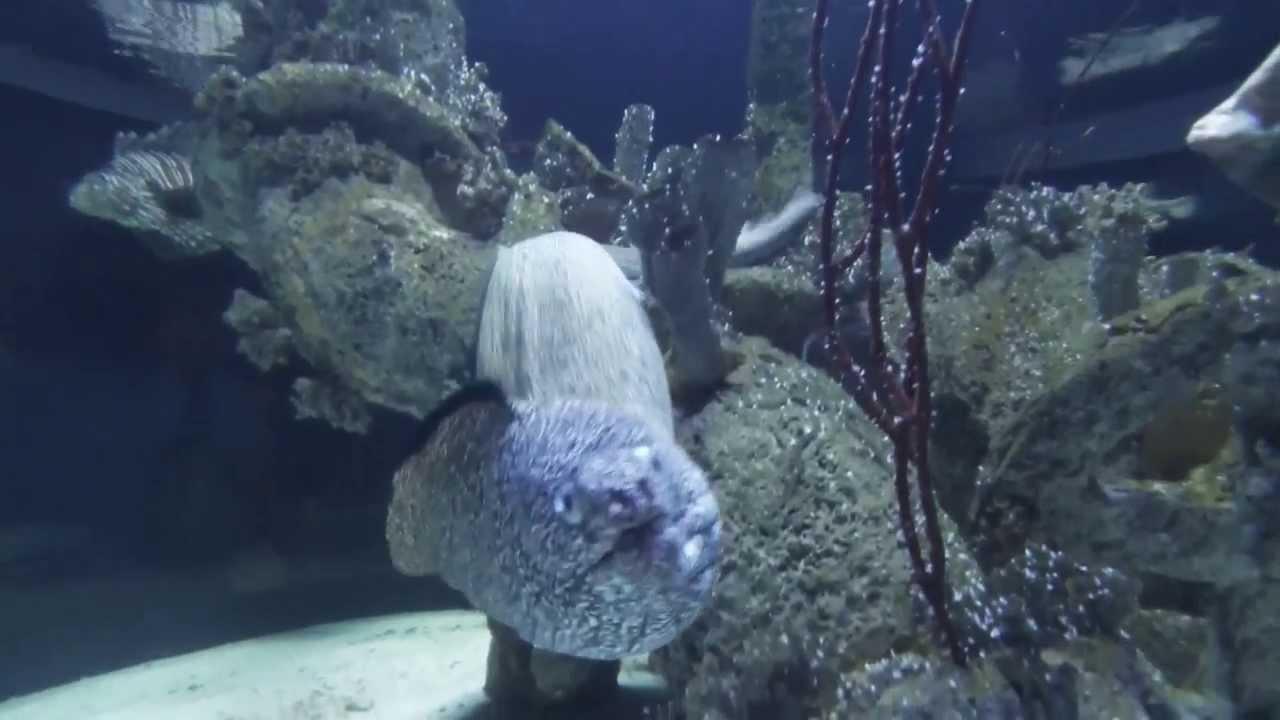 North Carolina Aquarium At Pine Knoll Shores Youtube