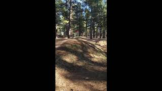 Fort Tuthill Bike Park Beginner Section.