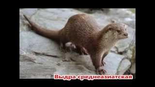 Красная книга Узбекистана. Животные.
