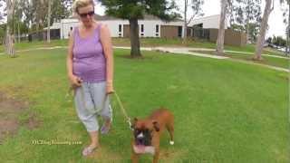 Dog Training Remedial Sit