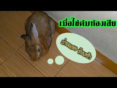 กระต่ายท้องเสียเบื้องต้นช่วยยังไงดี ?
