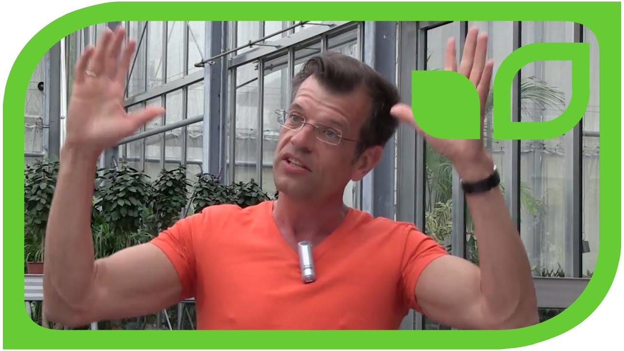 biologischer pflanzenschutz bei tomaten mit karl ploberger youtube. Black Bedroom Furniture Sets. Home Design Ideas