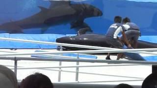 2010.7.4イルカさん衝撃映像!! thumbnail
