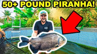 Catching a 50lb+ PIRANHA with My BARE HANDS!!! (ft. Catch Em All Fishing)