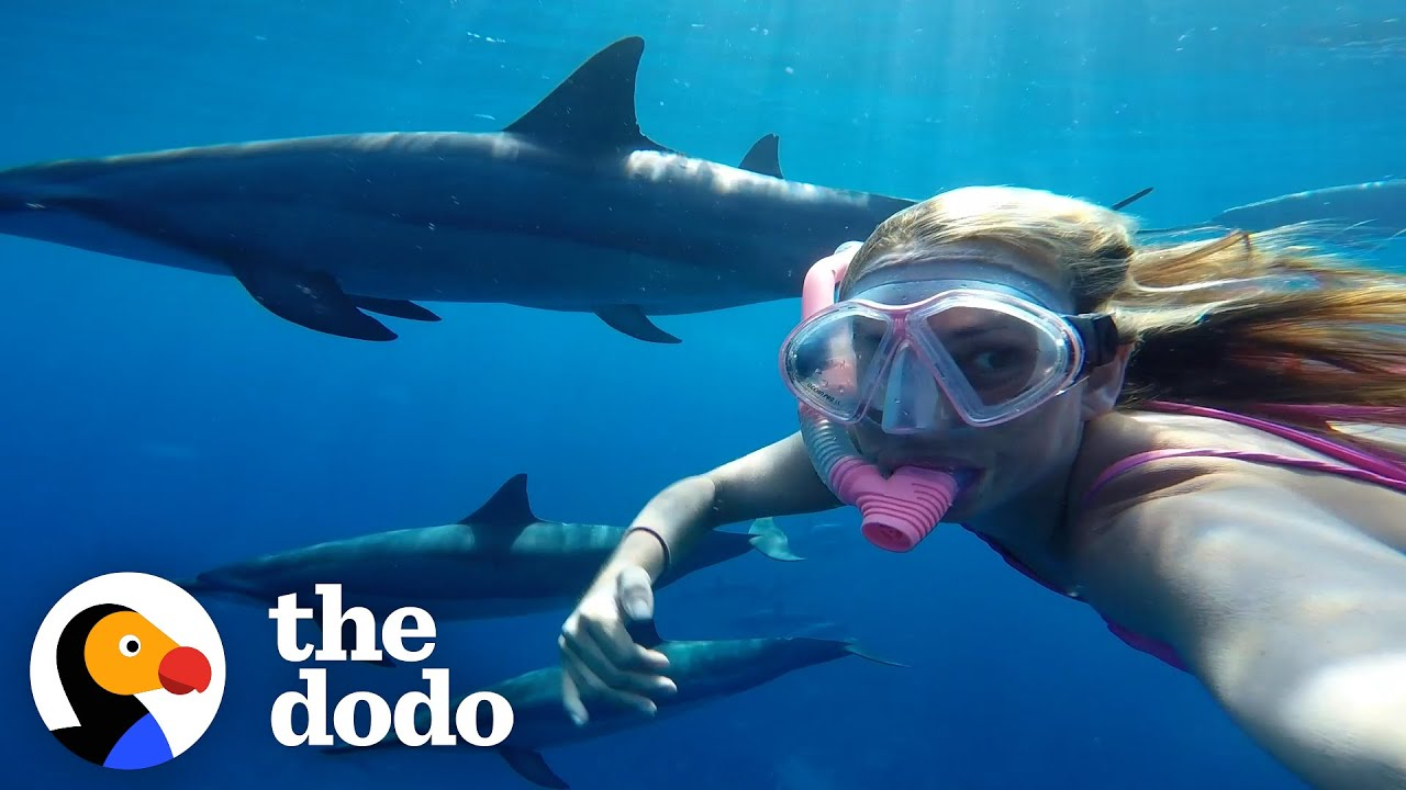 Wild Dolphins Play Catch With Their Favorite Person | The Dodo Wild Hearts