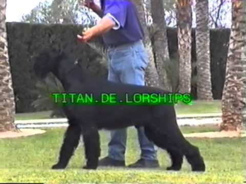 Lordship´s Kennel Giant Schnauzers