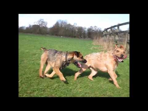Dog Walker Milton Keynes