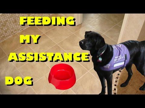 How I Feed My Dog
