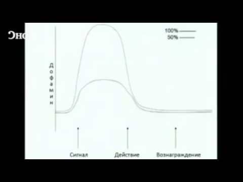 Роберт Сапольски - Мотивация и ожидание награды - Дофамин