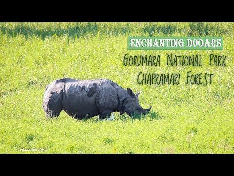 Enchanting Dooars | Jungle Safari | Gorumara National Park | Chapramari Forest | Travel Video