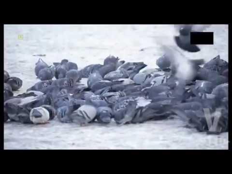 Kandagar.2010.PL.DVDRip.XviD-BiDA from YouTube · Duration:  1 hour 38 minutes 59 seconds