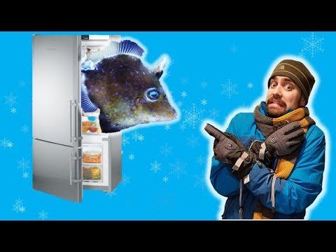 😬 My Filefish Spent The Night In A Refrigerator!