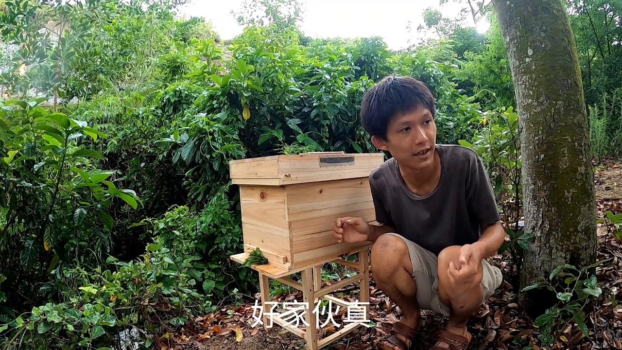 【真過癮】2箱蜂没有并排在一起,小伙运用近距离搬迁不回蜂的方法合并蜂群