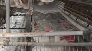 Manufacturer of Poultry Farm and Poultry Equipments Supplier
