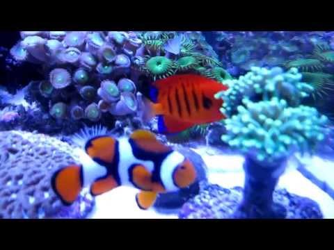 Saltwater Fish Species