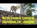 देखिये सक्करबाग ज़ू में तेंदुए का आतंक Watch Terror of Leopard in Sakkarbuag Zoo Junagadh