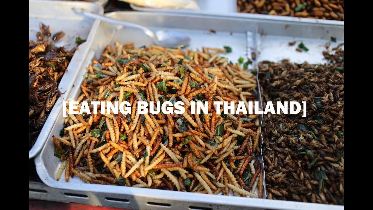 Hot asian bugs that eat furniture