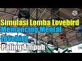 Simulasi Lomba Lovebird Konslet  Mp3 - Mp4 Download