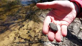Черепаха однодневка. Помогаем добраться до водоема.