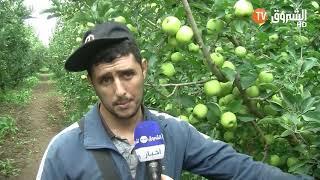 طلبة جامعيون يقومون بجني التفاح لتغطية مصاريف الدراسة  .