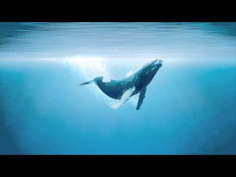 1 HOUR Whale Meditation (Peaceful and Relaxing)
